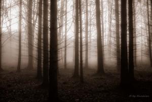 Bomen in de mist  Locatie Predín (CZ)